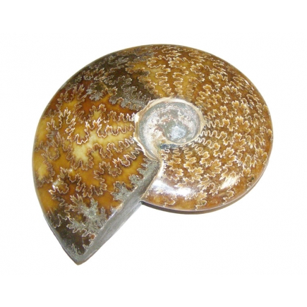 Ammonite Polished Piece 900g-1kg