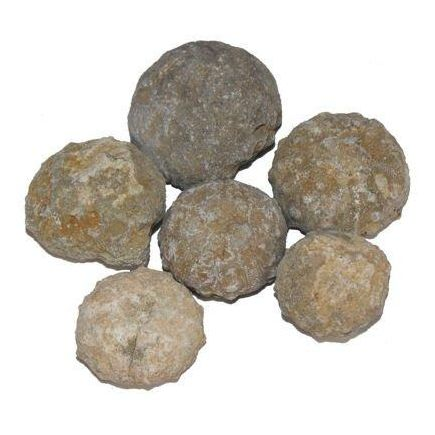 Fossil Urchins Rough - 500g