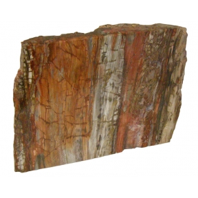 Half Polishedl Petrified Wood Chunk