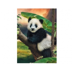 Paddy Panda Greeting Cards - Pack of 5