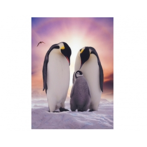 The Jones' - Penguins Greeting Cards - Pack of 5