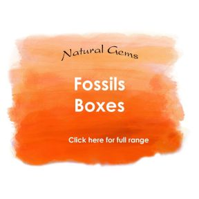 Fossil Boxes - Natural Gems Range