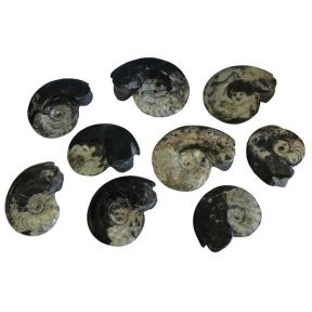 Goniatite Polished - Double Sided - 60-75mm