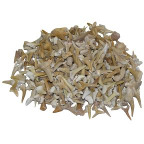 Shark Teeth - 250g