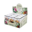 Goloka Blend Essential Oil Allergy Relief - Pack of 12